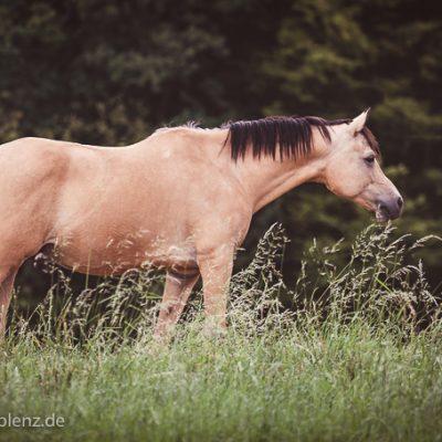 Pferdeshooting--5